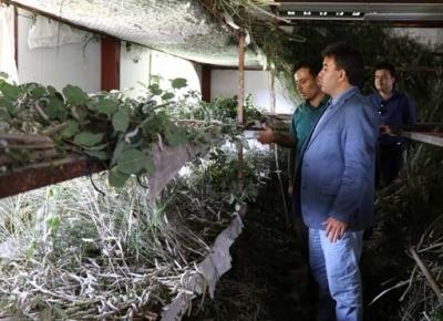 Antalyalı Çiftçi Aile İpek Böcekleri Sayesinde 40 Günde 15 Bin lira Kazanıyor