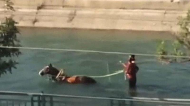 Adana'da Sıradan Bir Gün! At Arabasıyla Sulama Kanalında Gezintiye Çıktılar