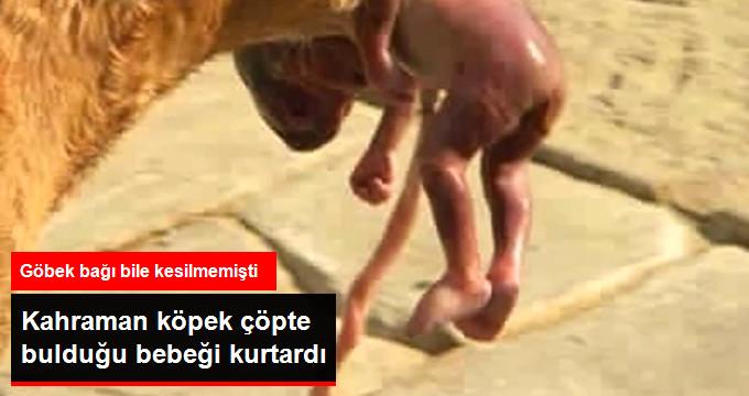 Annesi Bebeği Çöpe Attı, Sokak Köpeği Alıp Caddeye Taşıyarak Hayatını Kurtardı!