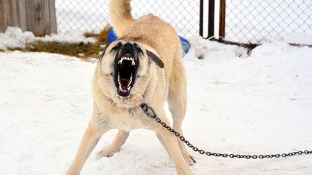 """Evinin Önünde Bulduğu Köpeğe Sahip Çıktı! Başına Gelenler """"Pes Artık"""" Dedirtti"""