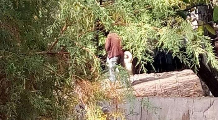 Günün İğrenç Haberi Çorum'dan! Kangal Köpeğe Tecavüz Ederken Yakalandı