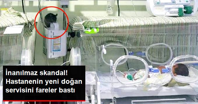 Hastanede Akıl Almaz Skandal! Özel Hastanenin Yeni Doğan Servisini Fareler Bastı!