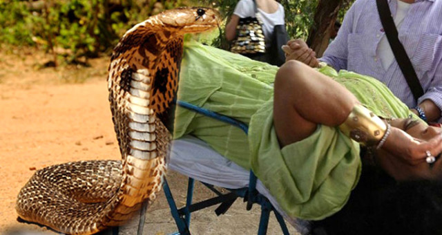 Hindistan'da Bülent Ersoy'u Kobra Yılanının Soktuğu Anlar Kamerada! Tam Banu Alkan'a Çekiştiriyormuş!
