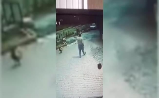 İstanbul'da Şaşırtan Görüntü! Telefonla Konuşurken Horoz Saldırdı, Kendisini Yerde Buldu