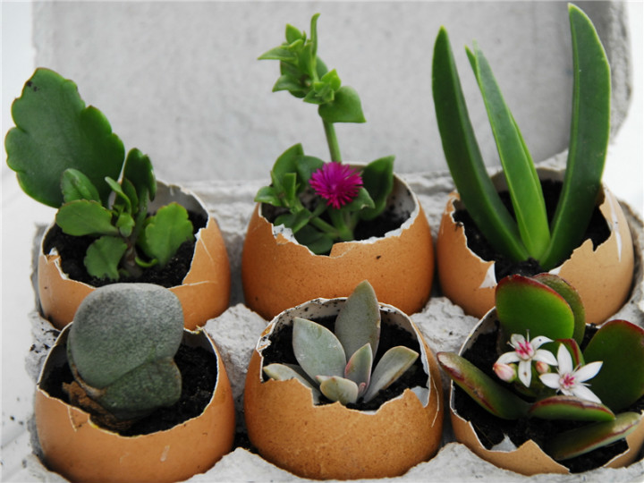 Yumurta Kabuklarını Çöpe Atmayıp Geri Dönüşümde Kullanmak İçin Çok İlginç Öneriler!