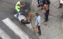 Sokak ortasında pitbull dehşeti