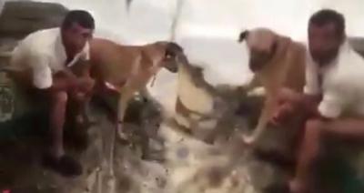 Yer: Mersin! Köpeğe Tecavüz Ederken Yakalanan Sapık Suçüstü Yakalandı
